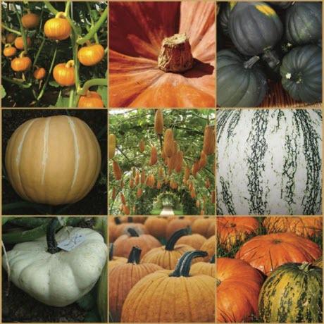 Pumpkin species from around the world
