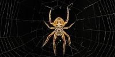 Fear of Spiders and Snakes Is Deeply Embedded in Us