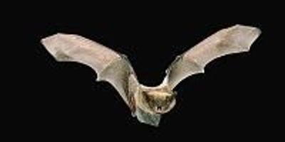 Bat Guano: A Reliable Record of Climate Change