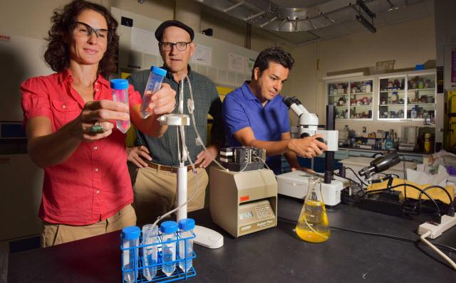 Sandia National Laboratories researchers