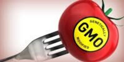INSIGHTS on GMO Detection