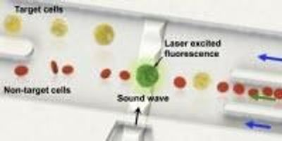 Researchers Develop Single Cell Level Sorting Technology Using Sound Waves