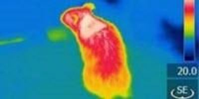 A Specific Protein Regulates the Burning of Body Fat to Generate Heat