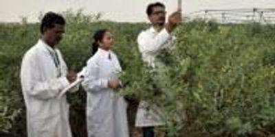 Breaking Legume's Crop Wild Relative Barrier