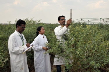 Researchers Milind (right) and Sathyanarayana (left), with Sharma,