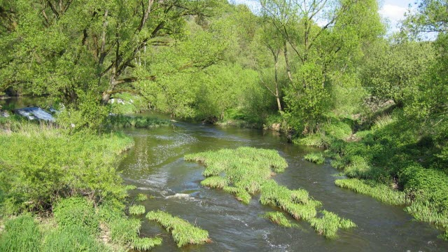 Preservation of Floodplains Is Flood and Diversity Protection