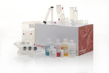 PureLink Fast Low-Endotoxin Plasmid Purification Midi and Maxi Kits