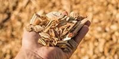 Turning Wood into Pharmaceutical Ingredients