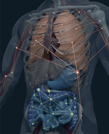 A model of the human body showing distinct B cell clonal networks
