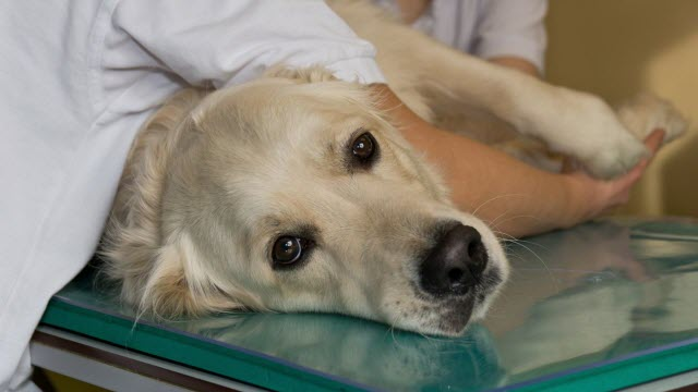 Dog Medically Treated