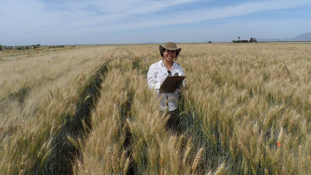 Dr. Viridiana Silva Perez in a Wheat Field in Mexico