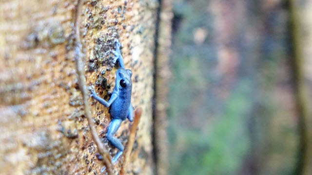 Imprinting Behaviors in Animals Could Lead to Formation of New Species