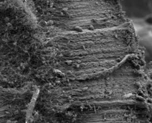 quartz fibers with carbon nanotubes