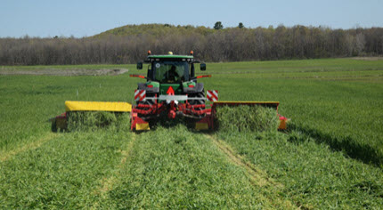 harvesting triticale in the spring