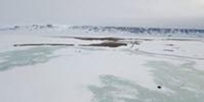 Last Year's Extreme Snowfall Wiped out Breeding of Arctic Animals and Plants