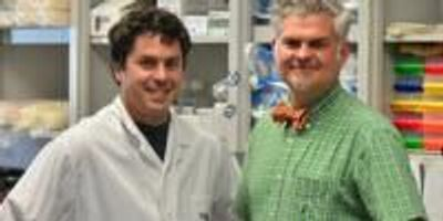 Healing Wounds with Cell Therapy