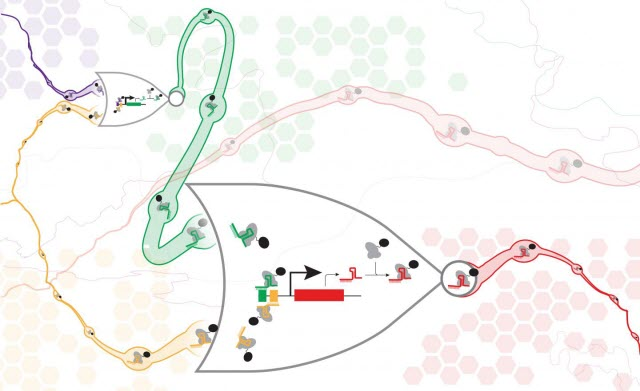CRISPR-dCAS9 NOR Gates