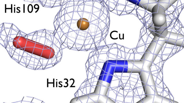Neutron crystallography maps LPMOs that break down fibrous cellulose