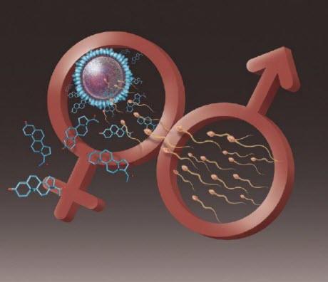 Hormones Trigger Sperm Power Kick