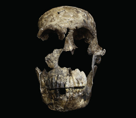 """""""Neo"""" skull of Homo naledi"""