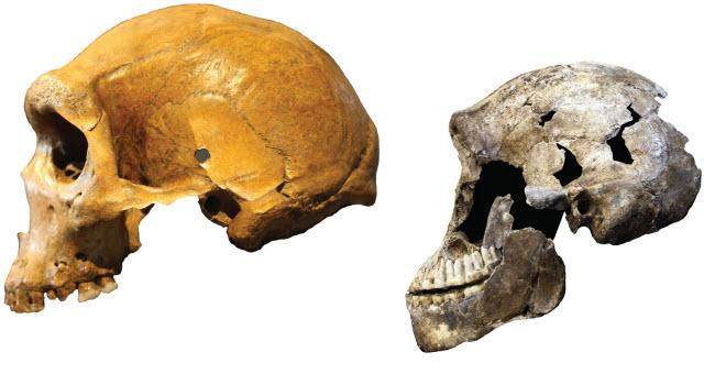 Homo naledi versus Kabwe