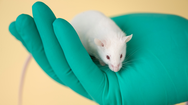 Lab Mice May Not Be Effective Models for Immunology Research | Lab Manager