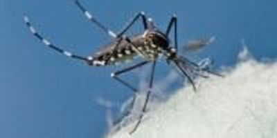 Scientists Find Zika RNA in a Second Mosquito Species