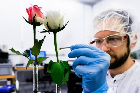 David Poxson, Laboratory of Organic Electronics,