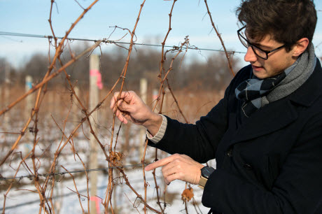 Al Kovaleski inspects grape vines at Anthony Road Winery
