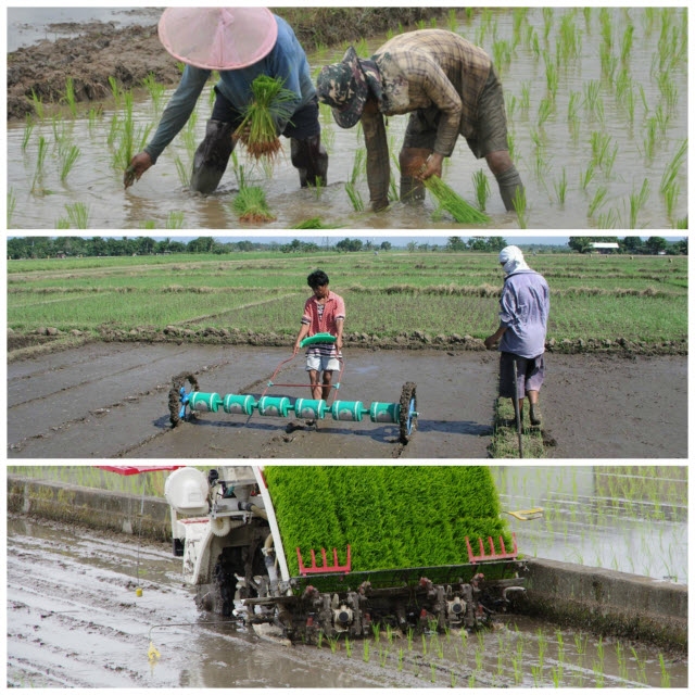 Different methods of planting rice