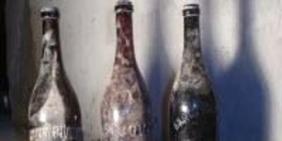 Analysis Yields Clues to Chemical Composition, Natural Aging of 100-Year-Old Beer