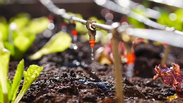 Pioneering Treatment Method Turns Sewage Sludge Into Farm-Safe Fertilizer - See more at: https://news.masdar.ac.ae/explore-news/stories-by-type/innovation/item/9722-pioneering-treatment-method-turns-sewage-sludge-into-farm-safe-fertilizer.html#sthash.IqIejNEK.dpuf