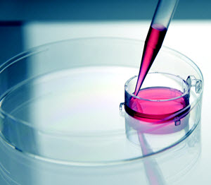BrandTech Scientific's BRAND Insert 2in1 cell culture inserts