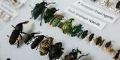 Entomologist Couple Donates World-Class Insect Collection to ASU