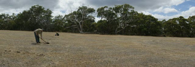 The restoration site at Mt. Bold Reservoir in South Australia