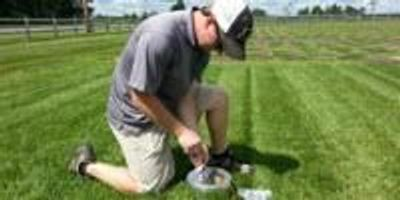 Grow, Mow, Mulch: Finding Lawn's Value