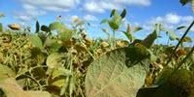 Complete Genome of Devastating Soybean Pathogen Assembled
