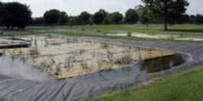 Floating Wetlands Show Promise for Water Treatment
