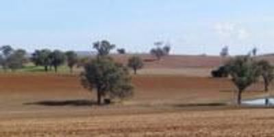 Changing Climate Changes Soils