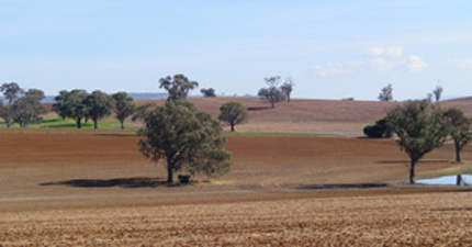 fields in New South Wales Central West