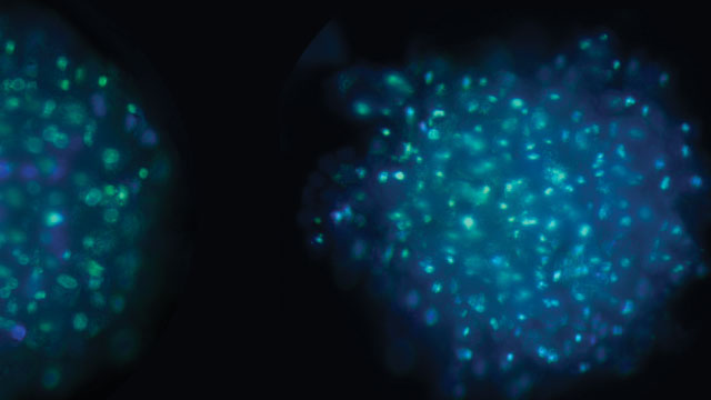 Close up of cell clusters