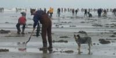 Warmer West Coast Ocean Conditions Linked to Increased Risk of Toxic Shellfish