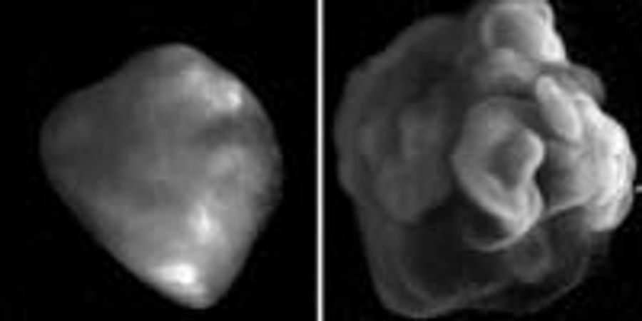 Scientists Engineer Gene Pathway to Grow Brain Organoids with Surface Folding