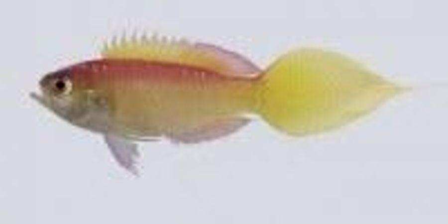 133 New Species Described by the California Academy of Sciences in 2016