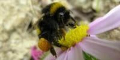 Scientists Propose 10 Policies to Protect Vital Pollinators