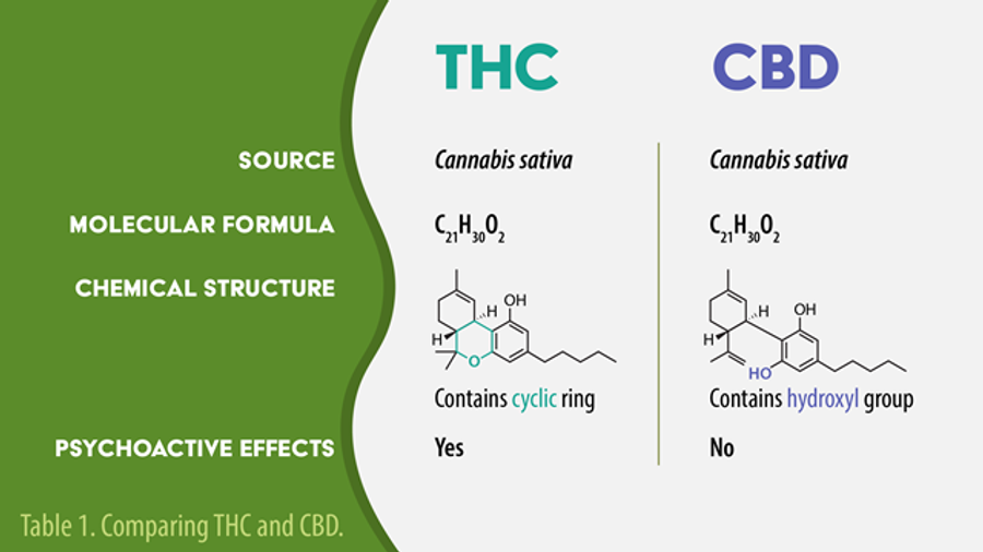 THC vs CBD: Uses, Side Effects, and Structure