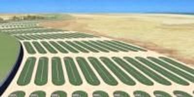 Microalgae Create Green Fuel, Reduce Food Insecurity