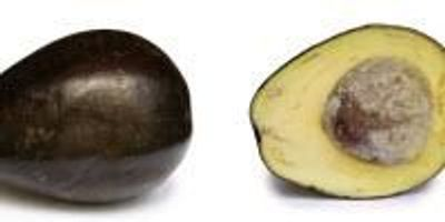 New Research Finds Avocado Extract Can Prevent Listeria in Food