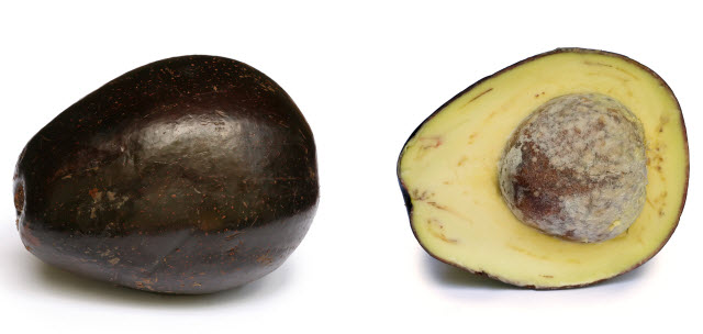 avocado with cross section