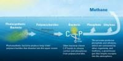 New Study Explains Mysterious Source of Greenhouse Gas Methane in the Ocean